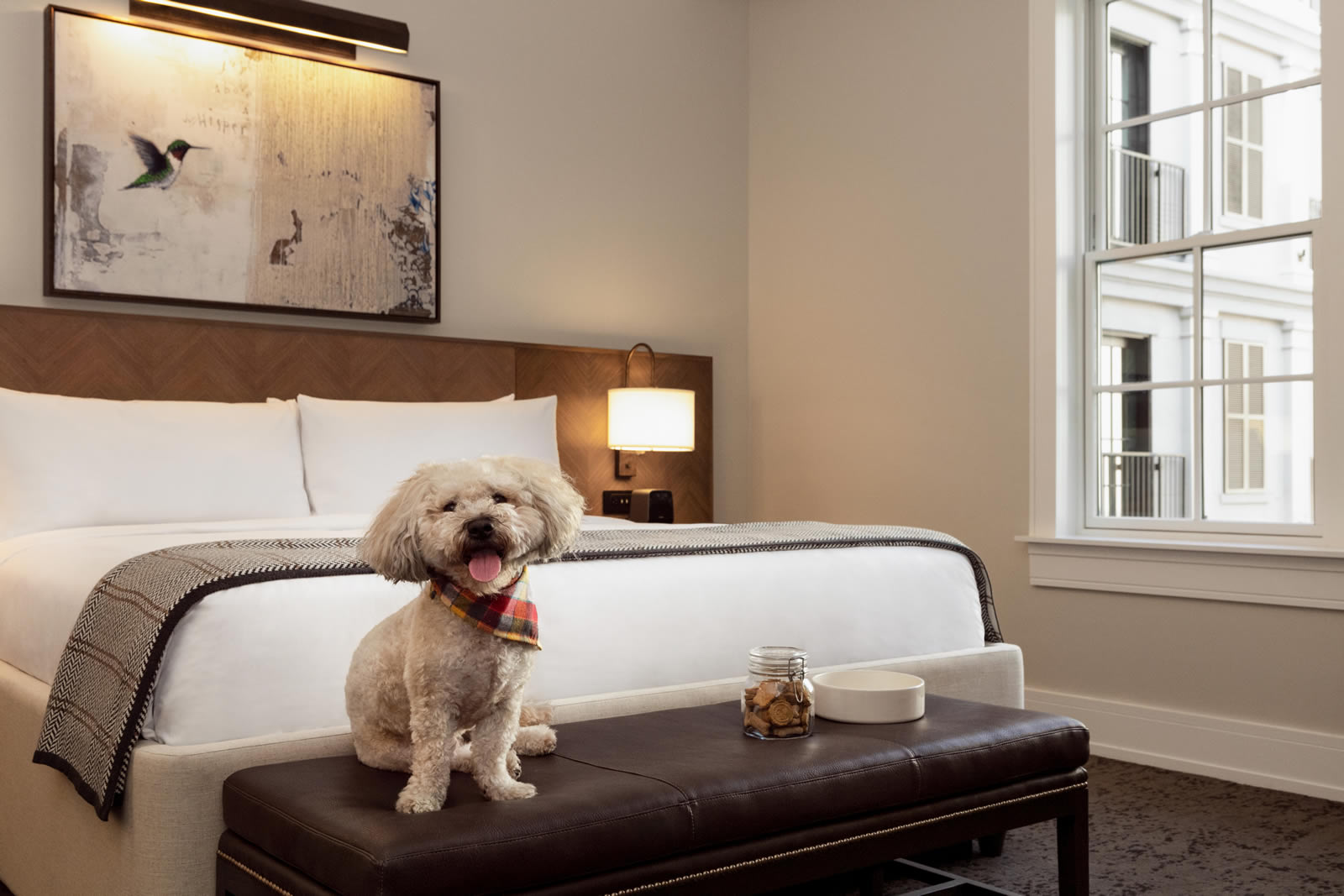 Pet-friendly room